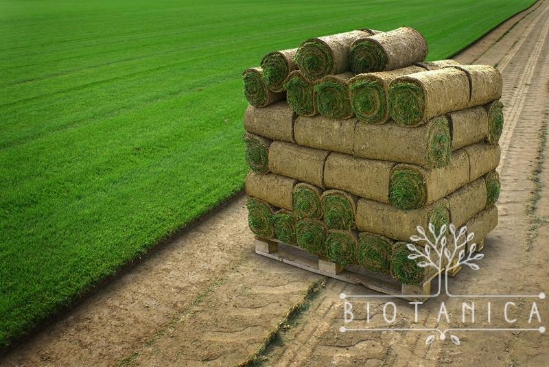 Trawnik z rolki – czyli ogród dla niecierpliwych